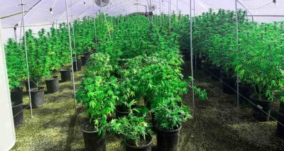 marijuana grow house showing indoor plant set up and lighting